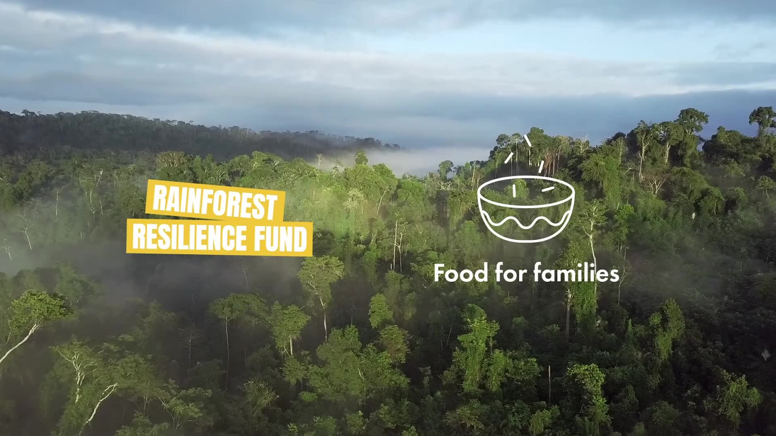 Cool Earth Rainforest Resilience Fund